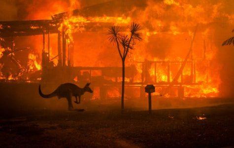 Australian Wildfires Causes Mass Destruction