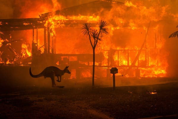 Australian Wildfires Causes Mass Destruction